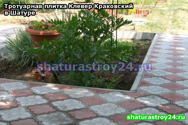 Клевер Краковский на даче в Шатурском районе